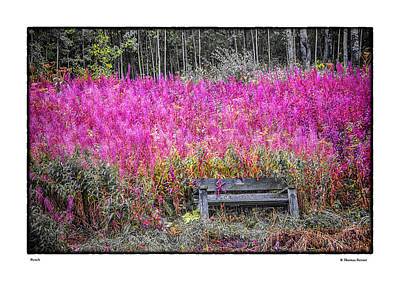 Photograph - Bench by R Thomas Berner