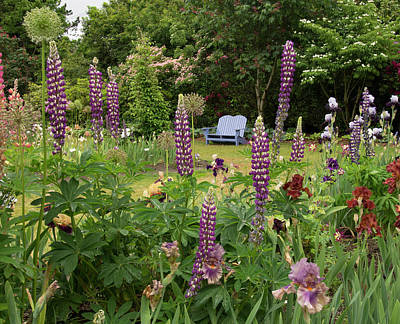 Photograph - Bench Through The Lupines by Jean Noren