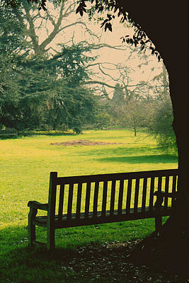 Bench Under A Tree Art Print