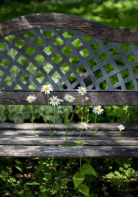 Photograph - Benched by Aaron Aldrich