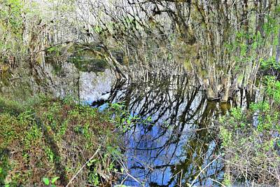 Photograph - Bended Reflections by Florene Welebny