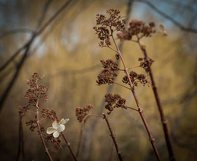 Photograph - Bending In The Wind by Kathleen Scanlan