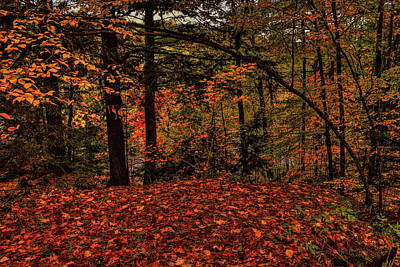 Photograph - Bending Over Fallen Leaves by Dale Kauzlaric