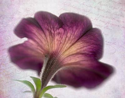 Photograph - Beneath A Dreamy Petunia by David and Carol Kelly