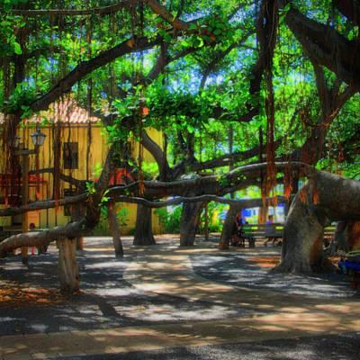 Beneath The Banyan Tree Art Print by DJ Florek