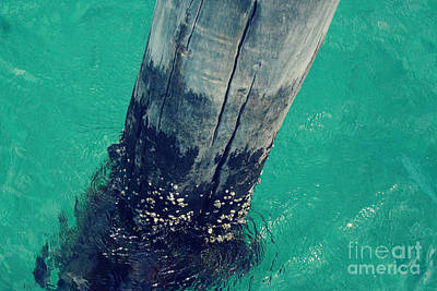 Busselton Photograph - Beneath The Busselton Jetty by Cassandra Buckley