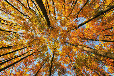 Beneath The Canopy Art Print by Edward Kreis