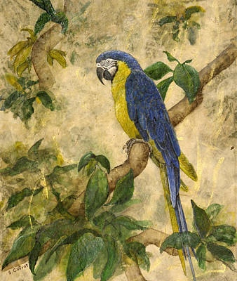 Macaw Mixed Media - Beneath The Canopy by Sandy Clift