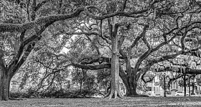 Tree Photograph - Beneath The Giants - New Orleans City Park 3 Bw by Steve Harrington