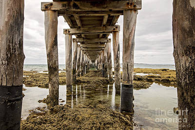 Photograph - Beneath The Jetty by Linda Lees