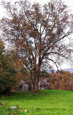 Photograph - Beneath The Oak Canopy by Joe Duket