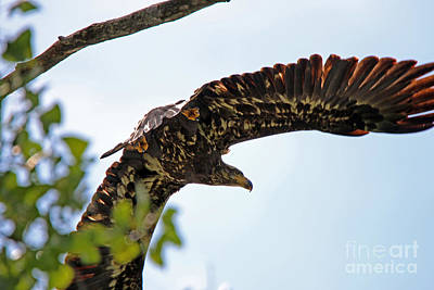 Beneath The Wings Of An Eagle  9038 Art Print by Jack Schultz
