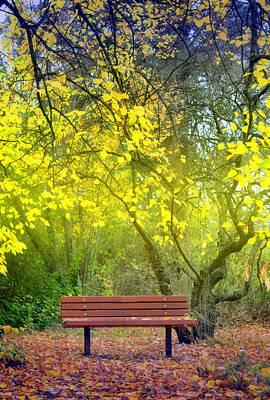 Photograph - Beneath The Yellow Leaves by Tara Turner