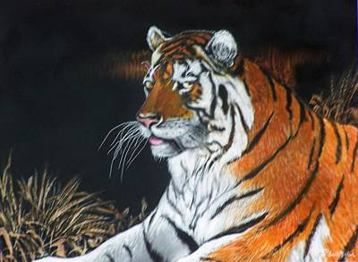 Bengal Boy  Sold Art Print