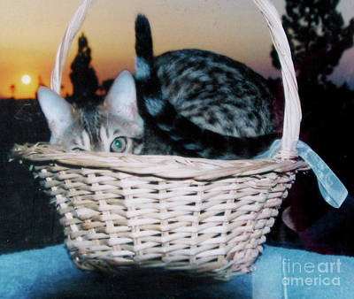 Art Print featuring the photograph Bengal Cat At Sunset by Phyllis Kaltenbach
