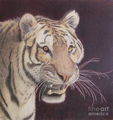 Bengal Art Print by Jena Suits