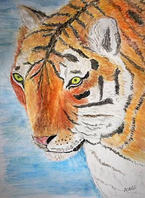 Painting - Bengal Tiger by Anne Sands