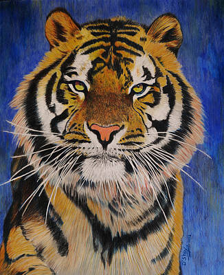 Bengal Tiger Art Print by Don MacCarthy