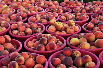 Photograph - Bennetts Orchards by Kim Bemis