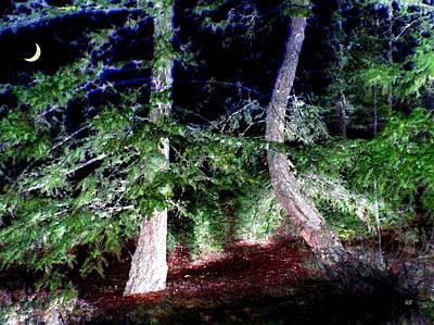 Fir Trees Digital Art - Bent Fir Tree by Will Borden