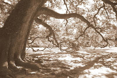 Sepia Photograph - Bent Tree by Carol Groenen