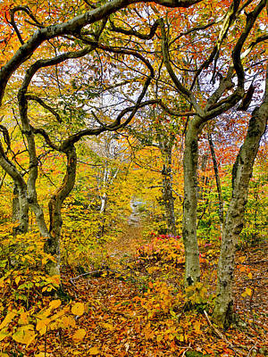 Photograph - Bent Tree Trail by Vance Bell