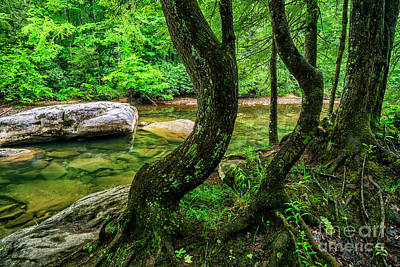 Photograph - Bent Trees Cranberry River by Thomas R Fletcher