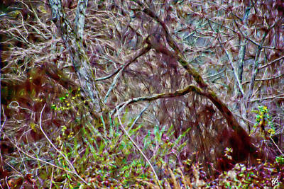 Photograph - Bent Trees Near The Bayou by Gina O'Brien