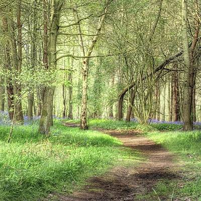 Trail Photograph - Bentley Woods, Warwickshire #landscape by John Edwards