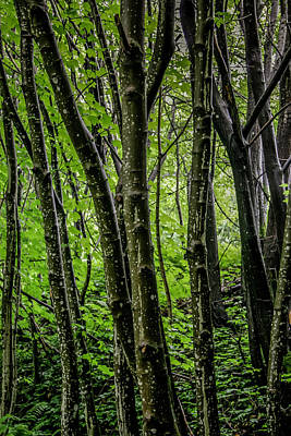 Photograph - Bergen Forest by KG Thienemann