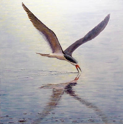 Painting - Black Skimmer by Joe Bergholm