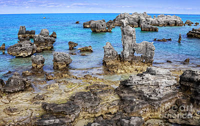 Photograph - Bermuda Coral Reef Faries by Charline Xia