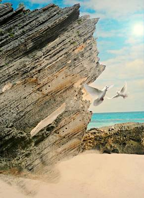 Photograph - Bermuda Wings by Diana Angstadt