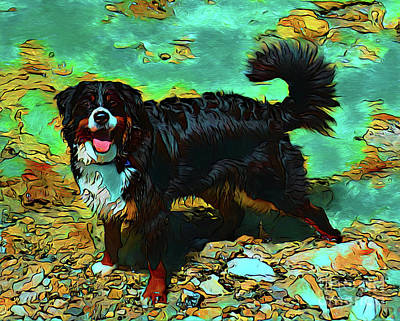 Photograph - Bernese Mountain Dog 19818 by Ray Shrewsberry