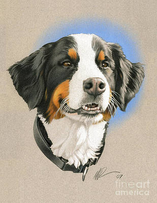 Color Pencil Drawing - Bernese Mountain Dog by Marshall Robinson