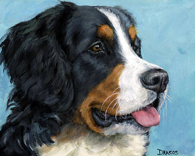 Bernese Mountain Dog On Blue Print by Dottie Dracos