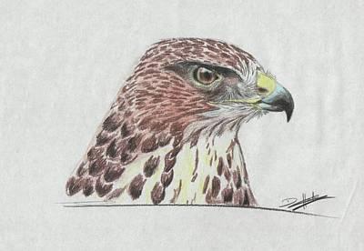 Buzzard Drawing - Bernie by David Hunter