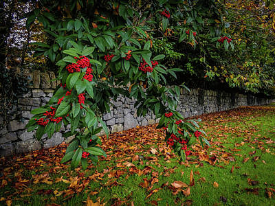 Photograph - Berries And Autumn Leaves In Ireland by James Truett