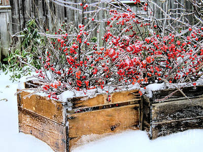 Photograph - Berries And Ice  by Janice Drew