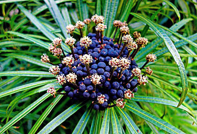 Photograph - Berries And Stamen by Robert Meyers-Lussier