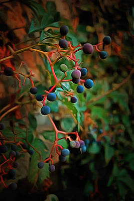 Photograph - Berries At Sunset by Dorothy Berry-Lound