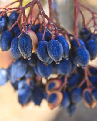 Berries Blue Too Art Print