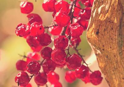 Photograph - Berries by Garvin Hunter