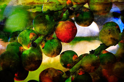Photograph - Berries by Harry Spitz