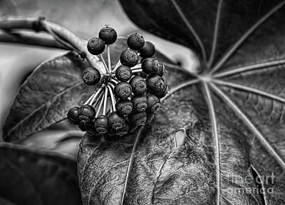 Digital Art - Berries In Black And White by Elijah Knight