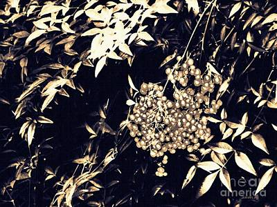 Photograph - Berries In Sepia by Sarah Loft