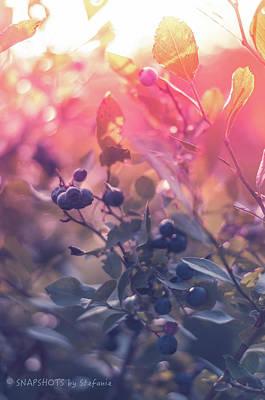 Berries In The Sun Art Print