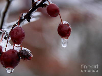 Photograph - Berries In Winter by Lennie Malvone