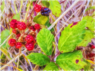 Photograph - Berries by Jonathan Nguyen