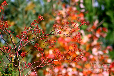 Jft Photograph - Berries by Marle Nopardi